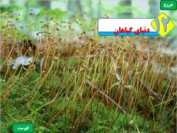 دانلود پاورپوینت درس علوم پایه نهم تجربی فصل 12 عنوان فصل دنیای گیاهان